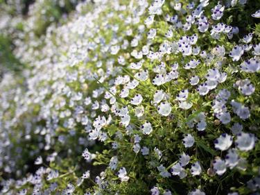 Flower_09_03