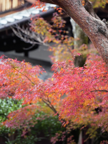 Kyoto_15