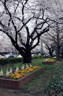 Kunitachi_1_06_1004