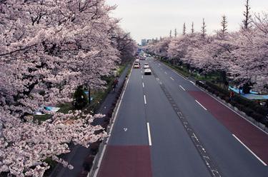 Kunitachi_1_33_1004