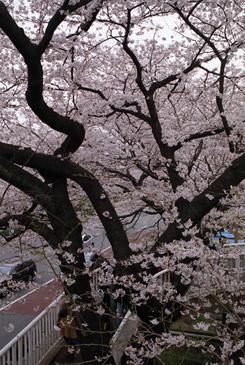 Kunitachi_2_09_1004