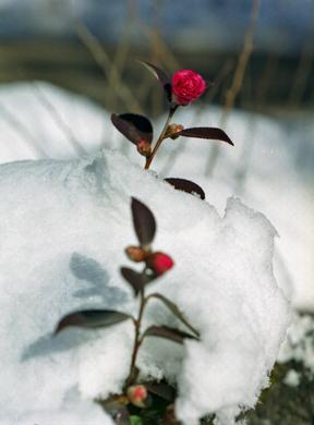 Snow_03_3